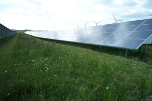Wildflowers flourish between the rows of solar panels